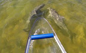 Transparent Canoe Kayak See Through Adventure Clear Kayak Rentals Tours Sales Based In
