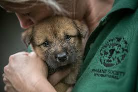 humane society dogs. Interesting Society South Korea Dog Meat Farm Inside Humane Society Dogs
