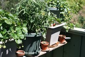 growing vegetables in a small space garden