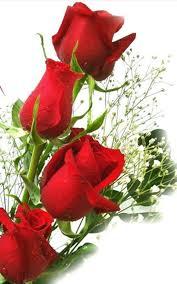 hd rose flower. Contemporary Rose Rose Flower Wallpaper Images 228368 Inside Hd Rose Flower