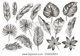 Set Leaf Exotics Vector Photo Free Trial Bigstock