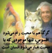 Image result for اوج فداکاری