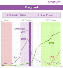 The Hormonal Relationship Between Lh Pdg And Hcg Easy