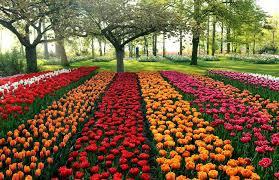 keukenhof tulip garden
