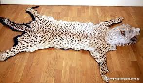 cheetah skin rug a leopard skin rug early century with cheetah skin rug head