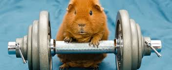 Image result for workout animals