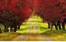 nature wallpaper hd for desktop free ...