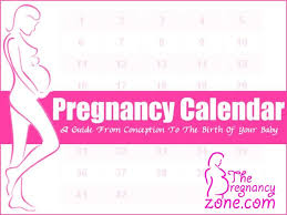 Pregnacy Clander Pregnancy Calendar A Guide From Conception To The Birth Of Your Baby