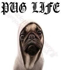 FUNNY <b>PUGS LIFE DOG</b> T-SHIRT-<b>MENS</b> WOMENS TOP-S M L XL ...