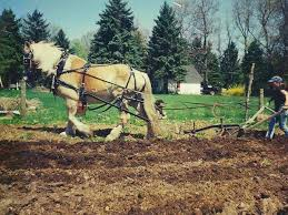 Doing It All at Flint Hill Farm | The Latest in Agritourism |  lancasterfarming.com