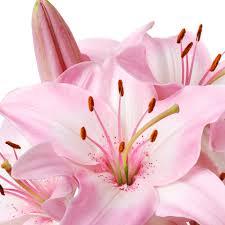ten weird facts about lilies