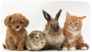kittens and puppies and bunnies and hamsters. Puppies And Kittens Bunnies Together With Hamsters