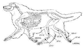 Acupressure Improves Your Dogs Digestion Whole Dog Journal