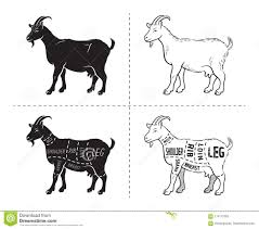 Goat Chart Vector Illustration Goat Cuts Diagram Or Chart Goat Black