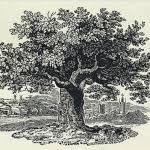 Higgins Family Tree – GOODSPEED HISTORIES
