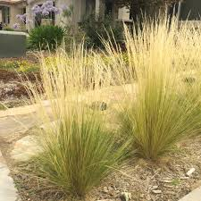 Small Picture Exterior Design Mexican Feather Grass With Stone Walkway For