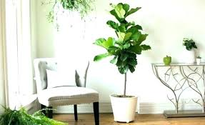 plant best large houseplants house plants safe for pets big trees collection in pots decoration of
