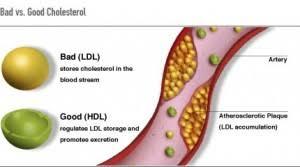 Colesterol - wikipedia