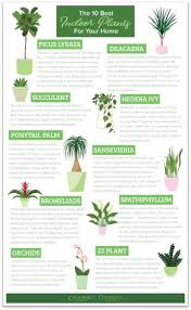 the best indoor plants how to take