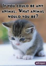 If You Could Be An Animal What Would You Be Magdalene