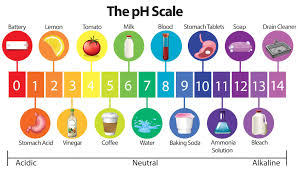 Is Coffee Acidic Questions About Coffees Ph Answered