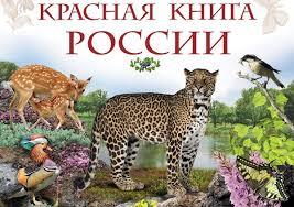 Птицы Красной книги России Животный мир Птицы Красной книги России 32