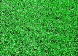 green grass soccer field. Green Grass Texture From A Soccer Field, Stock Photo Field