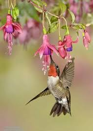 Image result for beautiful hummingbird in flowers