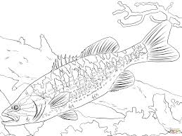 Small Picture Guadalupe Bass coloring page Free Printable Coloring Pages