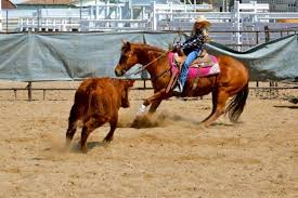 Utah 4 H Working Ranch Horse Program