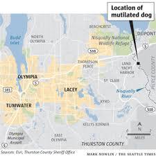 Mutilated Dog Found Near Olympia Thurston County Sheriffs Office