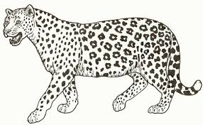 Coloring Pages For Children Leopard Leopard Spots Poem And Coloring