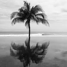 via tumblr on we heart it palm trees tumblr black and white59 and