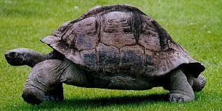 Resultado de imagen de significado de la tortuga