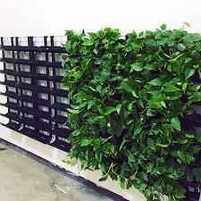 living wall vertical farming company