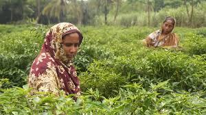 women farmers boost s rural economy asian development  women farmers boost s rural economy asian development bank