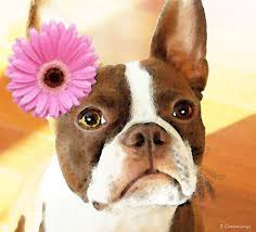yessy abstract art by sharon mings gallery prints boston terrier art the blushing br