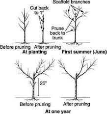 Natural Shapes Leaves Natural Fruits Tree Tree Shape Trees Fruit Tree Shapes