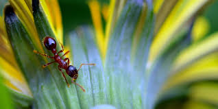 got ants in your plants here s what