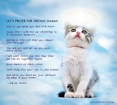 Loss Of A Cat Quotes Adorable Loss Of Cat Prayer Cats Prayer For Grieving Humans I Believe 48
