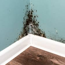 Common Places For Mold Growth In Your Home Mitiserve Restoration