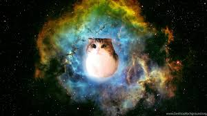 Funny Space Cat Wallpaper Backgrounds ...