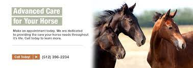 The Whole Horse Veterinary Clinic Veterinarian In San Marcos Tx Usa Home Horses Equine Veterinarian Veterinary Clinic