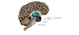 la sustancia negra del cerebro