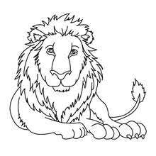 Small Picture Lion coloring pages Hellokidscom
