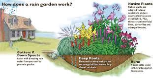 Small Picture Building a rain garden Slow rain down spread it out soak it in