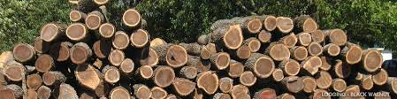 Wood Industry Logging