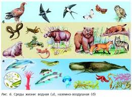 Среды обитания организмов Биология класс Среды жизни водная а наземно воздушная б