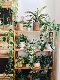 Appartiene alla famiglia delle araceae, ed è diffusa soprattutto come pianta d'appartamento. 10 Piante Da Interno Con Poca Luce E Facili Da Curare Livingcorriere
