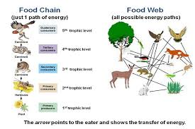 food web pyramid food chain and food web in ecosystem ecological pyramid